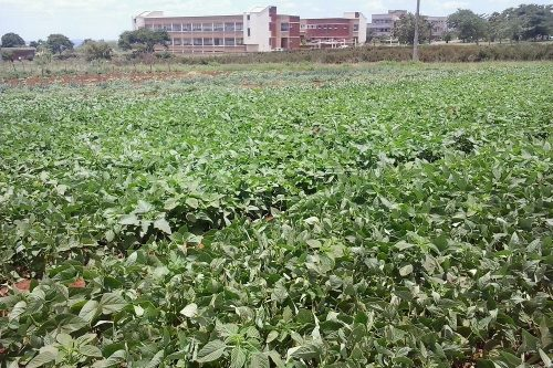 horticulture agronomy training (2)