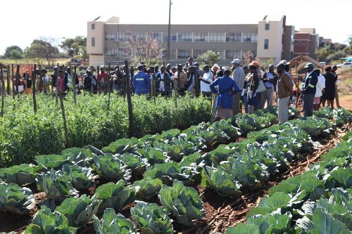 horticulture agronomy training (6)