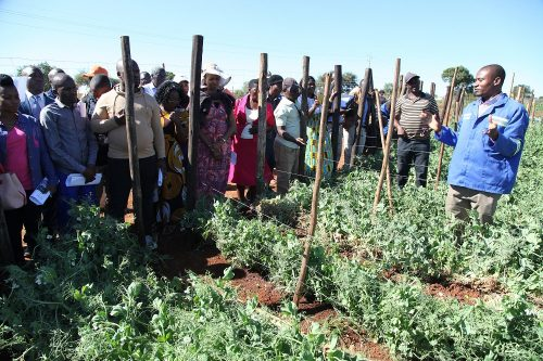 horticulture agronomy training (7)