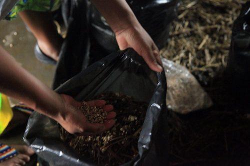 oyster mushroom training (2)